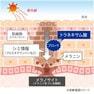 エステラボ 薬用エッセンスホワイト 150ml【業務用】 2